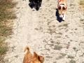 MiniPak-Lola-LM-Rey-Ginger-dog