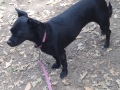 Sophie-dog