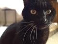 Willow-1-cat