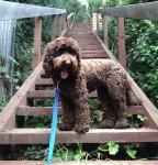 Rocket-stairs-dog