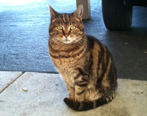 Feral Cat Rescue Charleston Sc