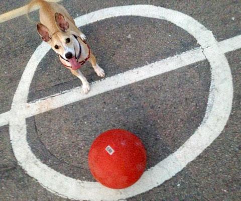 Who Walks Your Dog Process